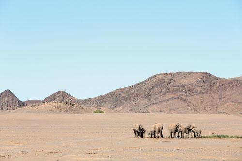 Jean-Charles-Vinaj-Photographe-ELEPHANTS-NAMIBIE-@JC-VINAJ