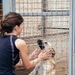 SPA-refuge-chien