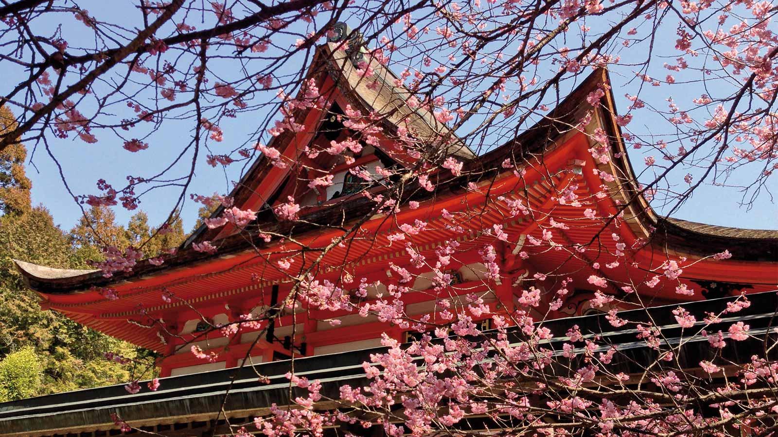 Sur la voie du zen au Japon