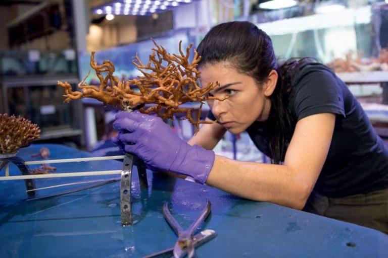Le corail, trésor des océans à préserver